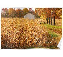 Autumn Corn Poster