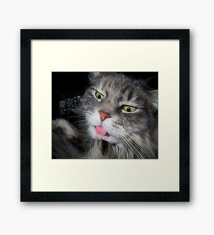 Crazy Eyes Cat Framed Print