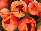 Tulips by Tiffany Dryburgh