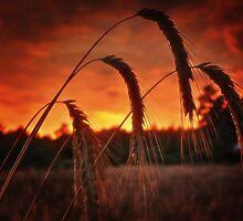Summer evening set on fire by floatingpilot