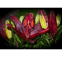 Red Lily Photographic Print