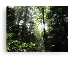 Cool forests of Canada Canvas Print