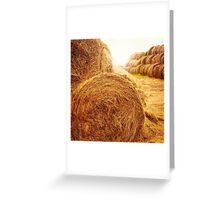 Golden hay bales on the field at summer at sunset light Greeting Card