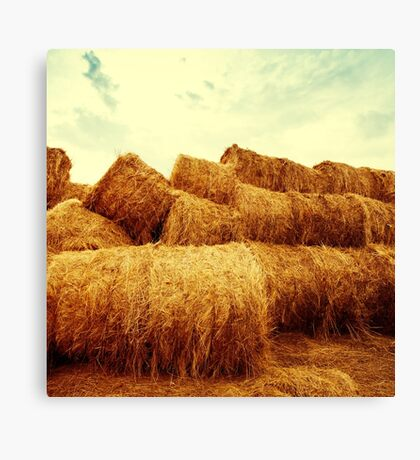 Golden hay bales on the field at sunset Canvas Print