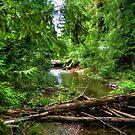 Wilderness Stream Photo Art by Skye Ryan-Evans