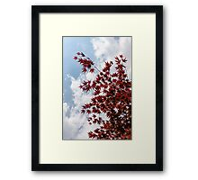 Japanese Maple Red Lace - Vertical Up Left Framed Print