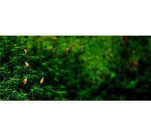 Artscape...........Moss and Ferns Photographic Print