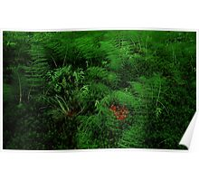 The Wild Forest Meadow............ Poster
