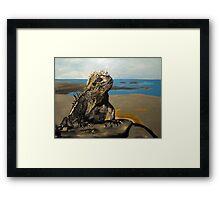 Marine Iguana Framed Print