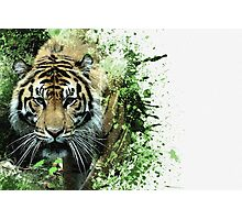 Tiger Ready Photographic Print