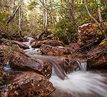 Mersey River - Overland Tack Tasmania by Ron Finkel