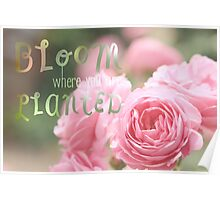 Bloom Where You Are Planted Pink Roses Poster