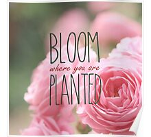 Bloom Where You Are Planted Pink Roses 2 Poster