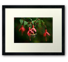 Fuchsia at Loch Na Fooey (wide) Framed Print