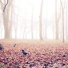 crows by RnDmPhoto