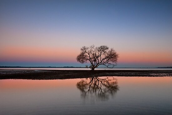 The Twilight Tree - Victoria Point Qld Australia by Beth  Wode