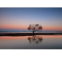 The Twilight Tree - Victoria Point Qld Australia Photographic Print