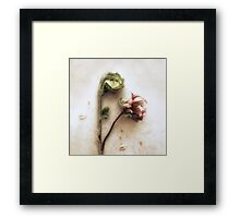 Azelea and Fiddlehead Fern #2 Framed Print