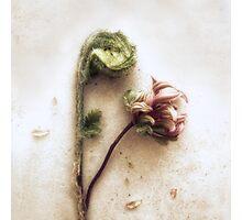 Azelea and Fiddlehead Fern #2 Photographic Print