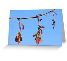 Sycamore Seeds in Spring Greeting Card