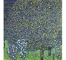 Gustav Klimt - Roses Under The Trees  Photographic Print