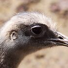 Greater Rhea Portrait by Jo Nijenhuis