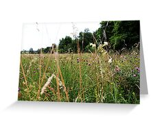 Meadow, wild nature, grass and flowers Greeting Card
