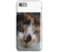 Sweet calico cat iPhone Case/Skin
