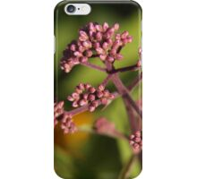 Joe Pye Weed iPhone Case/Skin