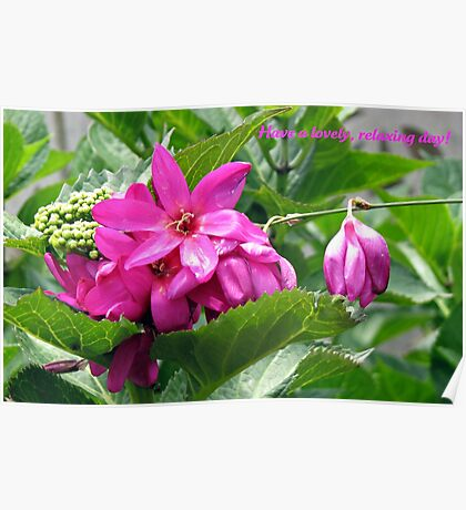 Have a lovely, relaxing day! Floral Greeting Card Poster
