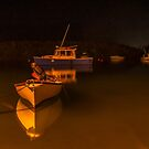 Under Low Light.. by buddybetsy