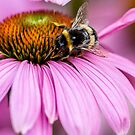 Bee on flower by PhotoLouis
