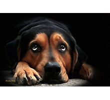 Puppy Dog Eyes Photographic Print