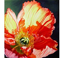 Popping Poppies Photographic Print
