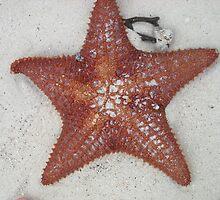 Starfish on the beach by BethLaurel