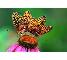 Butterfly Twins Photographic Print