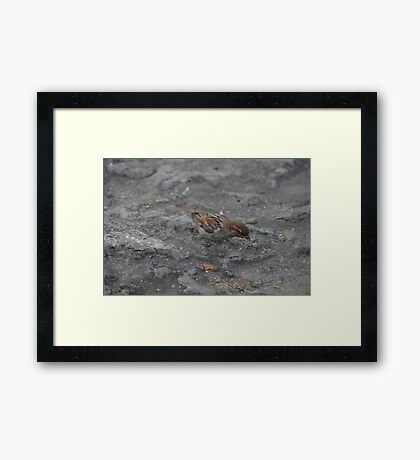 Bird and Stone Framed Print