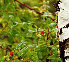 Birch and Berries Sticker