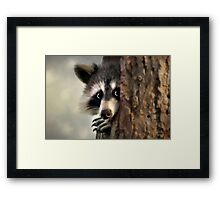 Conspicuous Bandit Framed Print
