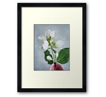Orange Blossom Time Framed Print