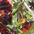 Lizard  by godtomanydevils