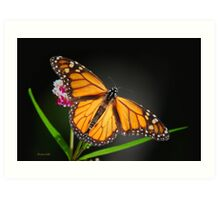 Open Wings Monarch Butterfly Art Print
