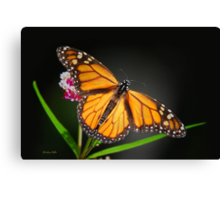 Open Wings Monarch Butterfly Canvas Print