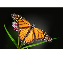 Open Wings Monarch Butterfly Photographic Print