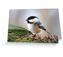 Pine Chickadee Bird Art Greeting Card