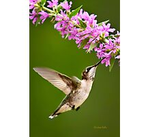 Touched Hummingbird Photographic Print