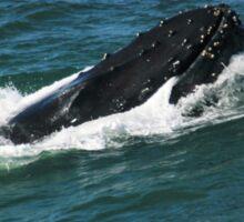 Humpback Whale Smile Sticker