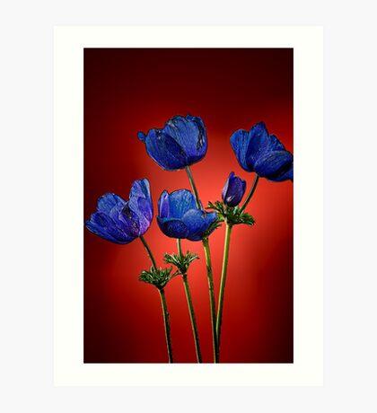 Blue poppies aganst red Art Print
