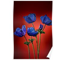 Blue poppies aganst red Poster