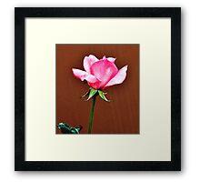 LONG STEM FRAGRANT PINK ROSE Framed Print
